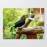 Curious Toucan Canvas Print