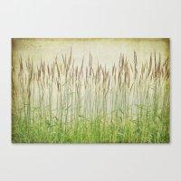 Summer Grasses Canvas Print