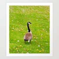 Art Print featuring Goose in a field of flowers by morningowl