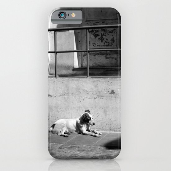 Stray Dog iPhone & iPod Case
