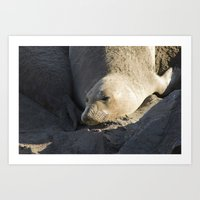 Elephant Seal: Contentme… Art Print