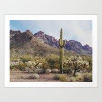 Arizona Cactus Art Print