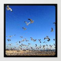 Fly, birds, fly! Canvas Print