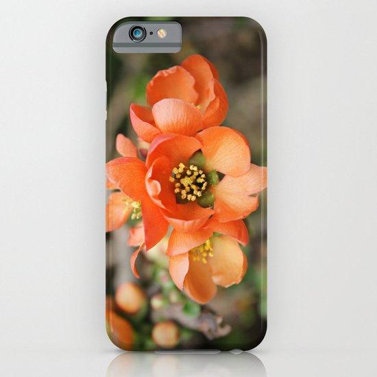 Orange Blossoms iPhone & iPod Case