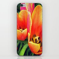 Coral Tulips in Bloom iPhone & iPod Skin
