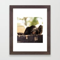 Peek-a-Boo Framed Art Print