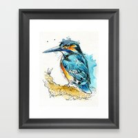 Regal Kingfisher Framed Art Print