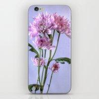 Pink Carnation iPhone & iPod Skin