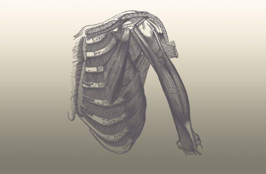 Anatomy 2 Art Print