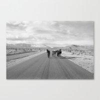 Spring Mountain Wild Horses Canvas Print