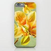 iPhone & iPod Case featuring sunny magnolias by Iris Lehnhardt