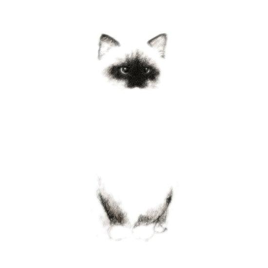 Angora Siamese Cat - Chat Siamois Angora Canvas Print