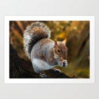 Squirrel nutkin Art Print