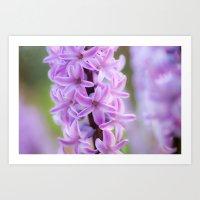 Hyacinthus orientalis 645 Art Print