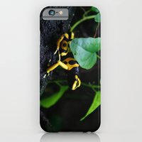 iPhone & iPod Case featuring Poison Dart Frog D. Leucomelas by Kimberly Sulzer-Girlwithafrogtattoo