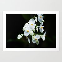 Wittle Orchids!  Art Print