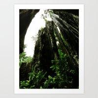 Redwoods #4 Art Print