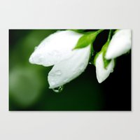 White Water Drops Canvas Print