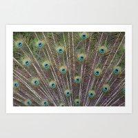 Pretty Peacock Feathers Art Print