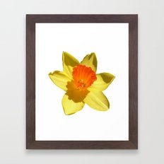 Daffodil Emblem Isolated On White Framed Art Print