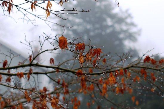 autumn storms Art Print