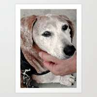 Portrait of a Dachshund Art Print