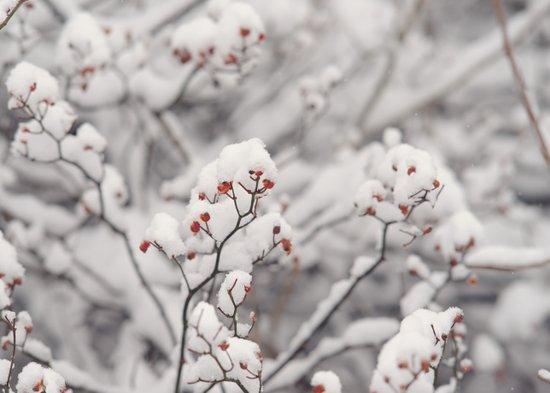 Red Winter Art Print