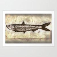 Sardine Art Print