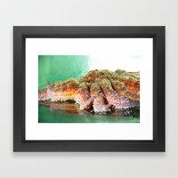 Sunflower Sea Star Framed Art Print