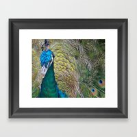 Peacock Up Close Framed Art Print