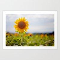 Sonnenblume Art Print