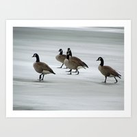 Graceful Geese Art Print