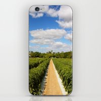 Tomato Fields  iPhone & iPod Skin