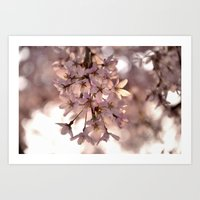 Cherry Blossom Spring Art Print