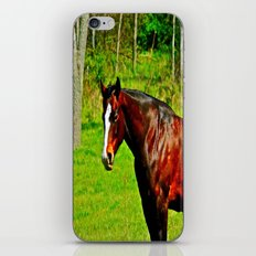 Equine Beauty iPhone & iPod Skin