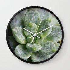 Succulent Pachyphytum Wall Clock