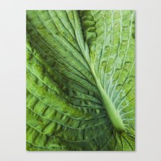 texture of a leaf Canvas Print