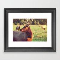 Summer Fields | 05 Framed Art Print