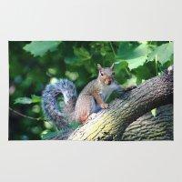 Tree Squirrel Rug