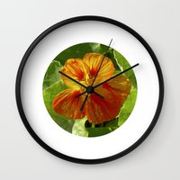 nasturtium bloom XI Wall Clock