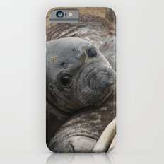 elephant seal pup iPhone 6 Slim Case