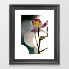 Spot Light Flower Framed Art Print