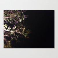 Jacaranda tree, blooming in the night Canvas Print