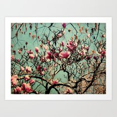 Pink Japanese Magnolia Tree in Flower Art Print