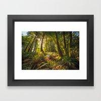 Redwood Regional Framed Art Print