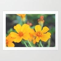 orange flowers. Art Print