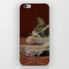 Cat Paws iPhone & iPod Skin