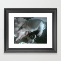 Sleeping Puppies Framed Art Print