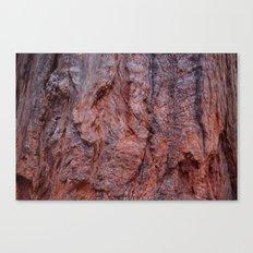 Redwood Canvas Print