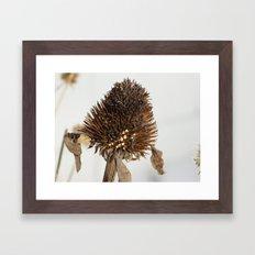 Flower No.1 Framed Art Print